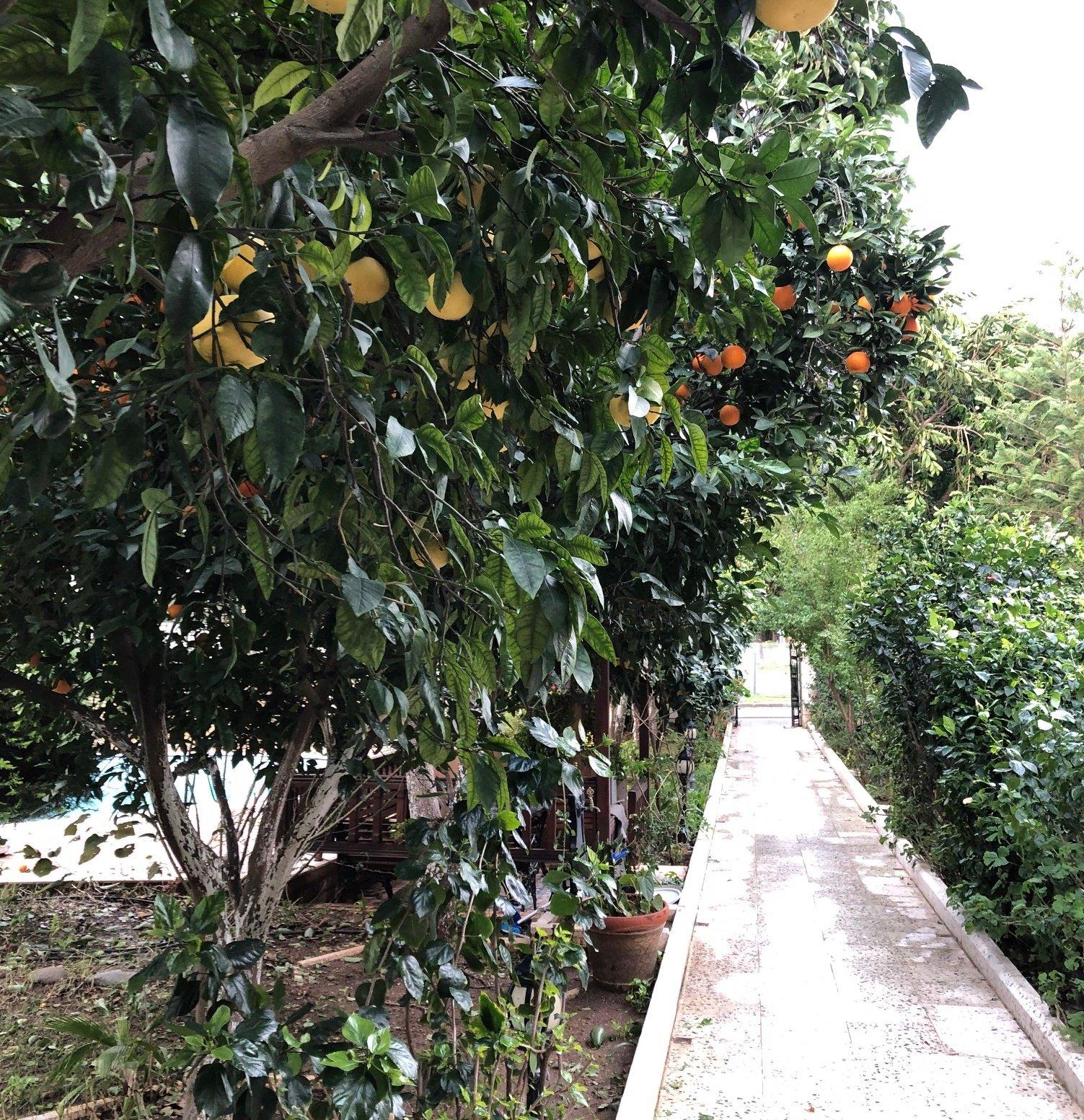 Что выращивают в Алании